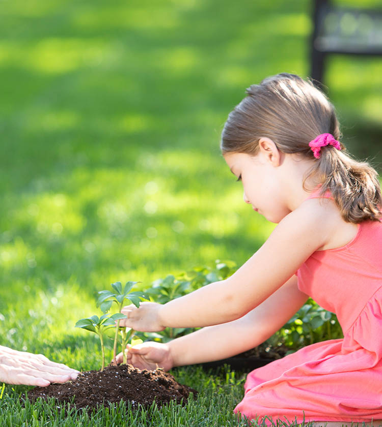 Preschool girl planting in the dirt