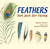 Feathers: Not Just for Flying | Children's Book